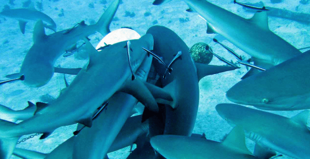 sharks-feeding-frenzy-bite