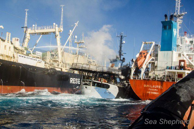 Photo: Sea Shepherd Conservation Society